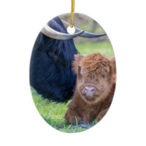 Newborn scottish highlander calf with mother cow ceramic ornament