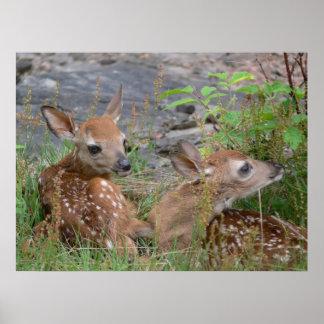Newborn Twin Bambis Poster