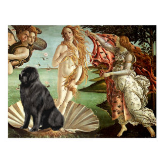 Newfie 1 - Birth of Venus Postcard