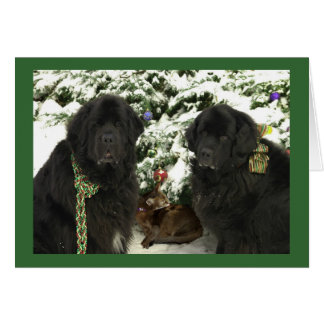 Newfie Christmas Card