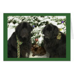 Newfie Christmas Cards