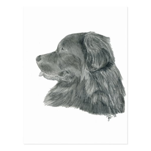 Newfie graphite drawing postcard