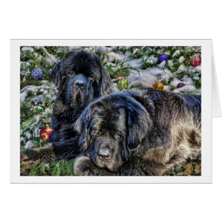 Newfie Holiday Wishes Card