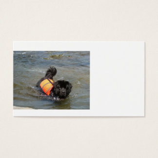newfie in water.png business card