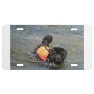 newfie in water.png license plate
