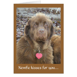 Newfie kisses for you... card