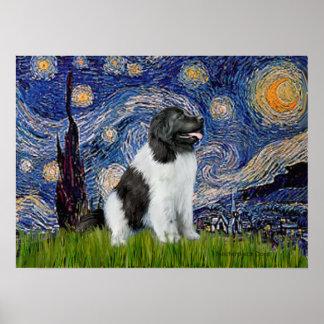 Newfie Landseer - Starry Night Posters