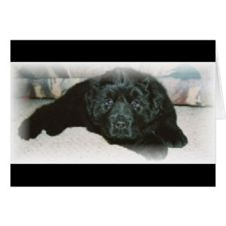 Newfie love greeting card