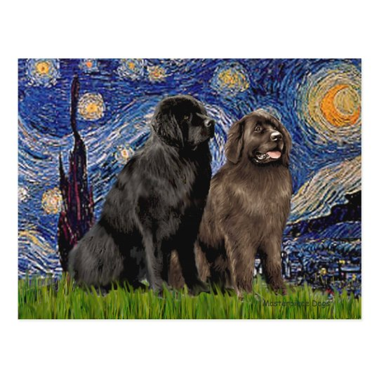 Newfie Pair - Starry Night Postcard