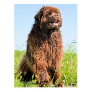 newfie sitting.png postal