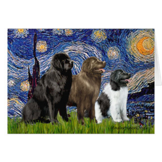 Newfie Trio - Starry Night Greeting Card