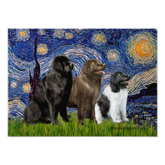 Newfie Trio - Starry Night Poster