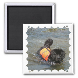 Newfie Water Rescue Magnet Magnets