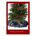 Newfies & the Christmas Cat Greeting Cards