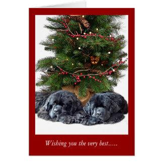Newfies y el gato del navidad tarjeta de felicitación