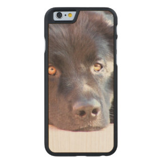 newfoundland-3 carved® maple iPhone 6 slim case