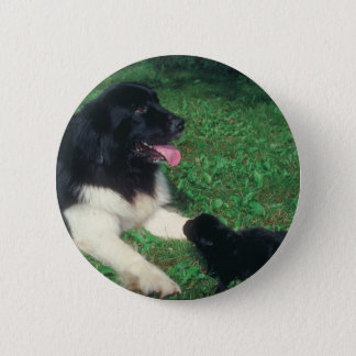 Newfoundland Button