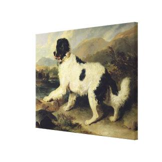 Newfoundland Dog Called Lion, 1824 (oil on canvas) Canvas Print