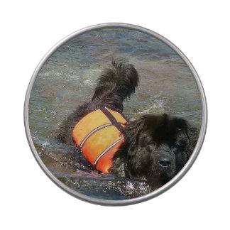 Newfoundland Dog Jelly Belly Tins