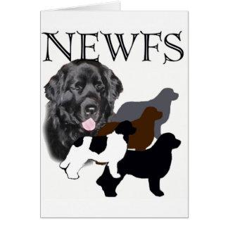 Newfoundland dog four colors card