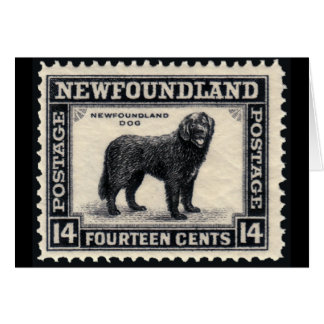 Newfoundland Dog Gifts Card