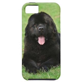 Newfoundland dog iPhone 5 cases