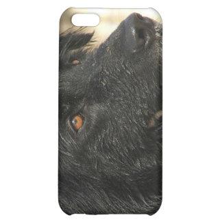 Newfoundland Dog iPhone Case iPhone 5C Covers