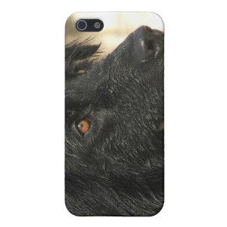 Newfoundland Dog iPhone Case Case For iPhone 5