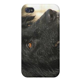 Newfoundland Dog iPhone Case iPhone 4 Cover