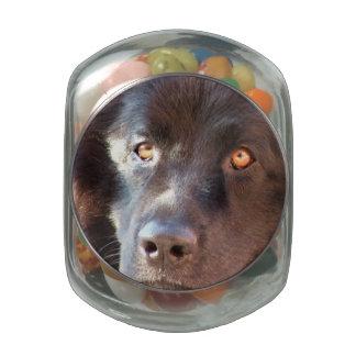 Newfoundland Dog Jelly Belly Candy Jars