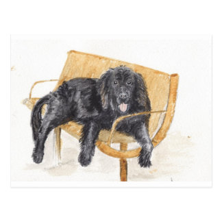 Newfoundland Dog on bench, Postcard