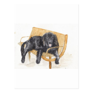 Newfoundland Dog on bench, Postcard