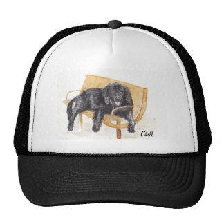 Newfoundland Dog on bench, trucker hat.