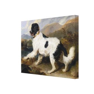 Newfoundland Dog Painting Canvas Print