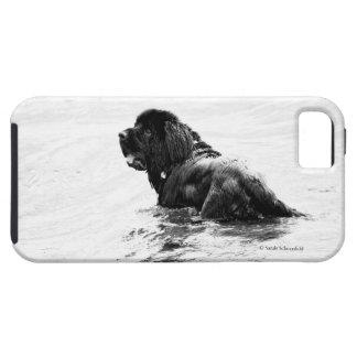 Newfoundland Dog Phone Case iPhone 5 Case