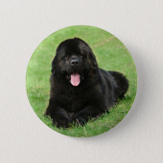Newfoundland dog pinback button