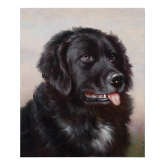 Newfoundland Dog Portrait Print