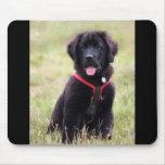 Newfoundland dog puppy beautiful cute photo, gift mousepads