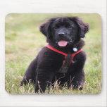 Newfoundland dog puppy beautiful cute photo, gift mousepad