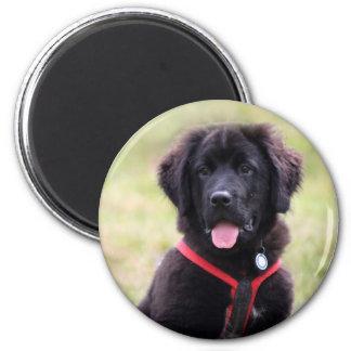 Newfoundland dog puppy cute beautiful photo, gift 2 inch round magnet