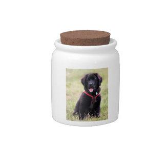 Newfoundland dog puppy cute beautiful photo, gift candy jar
