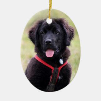 Newfoundland dog puppy cute beautiful photo, gift ceramic ornament