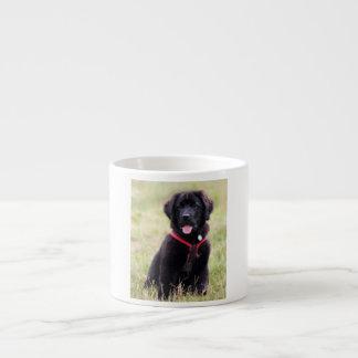 Newfoundland dog puppy cute beautiful photo, gift espresso cup