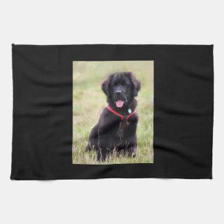 Newfoundland dog puppy cute beautiful photo, gift kitchen towel