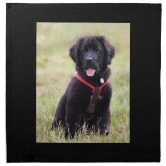 Newfoundland dog puppy cute beautiful photo, gift napkin