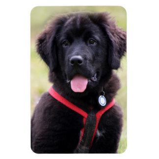 Newfoundland dog puppy cute beautiful photo, gift vinyl magnets