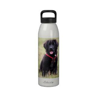 Newfoundland dog puppy cute beautiful photo, gift drinking bottles
