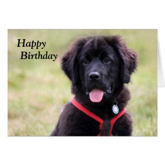 Newfoundland dog puppy cute photo birthday card