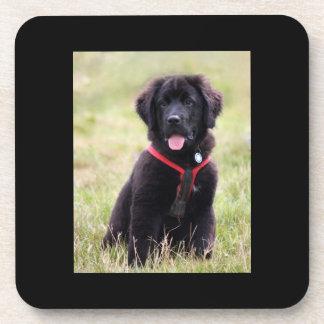 Newfoundland dog puppy cute photo, gift beverage coaster