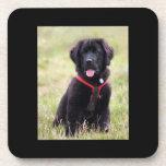 Newfoundland dog puppy cute photo, gift drink coasters